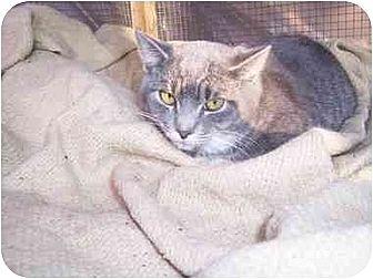 Domestic Mediumhair Cat for adoption in Winnsboro, South Carolina - Chloe