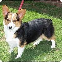 Adopt A Pet :: Rocky - Inola, OK
