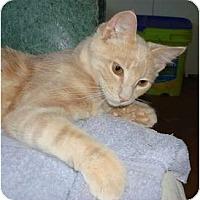 Adopt A Pet :: Garfield - Lake Charles, LA
