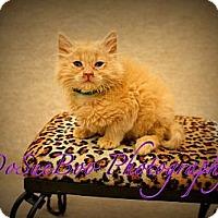 Adopt A Pet :: Trooper - Warren, MI