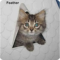 Adopt A Pet :: Feather - Jacksonville, FL