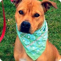 Adopt A Pet :: Zeva - Green Bay, WI
