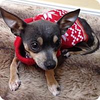 Adopt A Pet :: Jingles - AUSTIN, TX