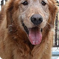 Adopt A Pet :: Mason - Salem, NH