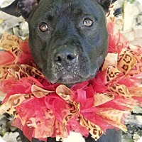 Adopt A Pet :: Willow - Cleveland, OH