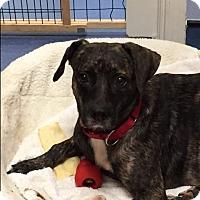 Adopt A Pet :: Anatascia - Jupiter, FL