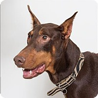 Adopt A Pet :: Cali - San Luis Obispo, CA
