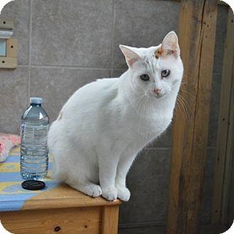 Cat Rescue Mississauga Ontario