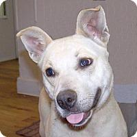 Adopt A Pet :: 16-d04-003 Cookie - Fayetteville, TN