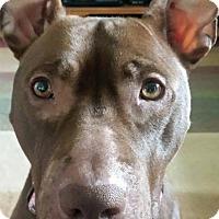Adopt A Pet :: Ruth - Eastpointe, MI