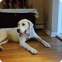 Adopt A Pet :: Candy - Flemington, NJ