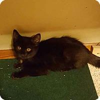 Adopt A Pet :: Landon - Irwin, PA