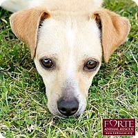 Adopt A Pet :: Holden - Marina del Rey, CA