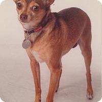 Adopt A Pet :: Tippy - Novato, CA