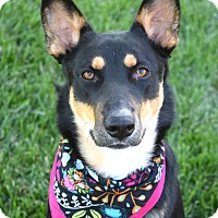 Adopt A Pet :: Holly - Dublin, CA