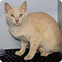 Adopt A Pet :: Carson - Mount Sterling, KY