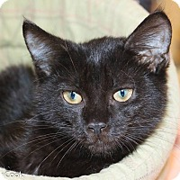 Adopt A Pet :: Cider - Ann Arbor, MI
