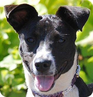 Border Collie/Terrier (Unknown Type, Medium) Mix Dog for adoption in Cedartown, Georgia - Biscuit