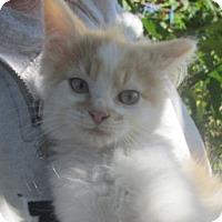 Adopt A Pet :: Twix - Germantown, MD
