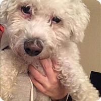 Adopt A Pet :: Casper - Encino, CA