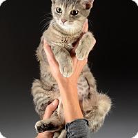 Adopt A Pet :: Kanga - Cincinnati, OH