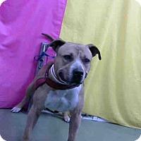 Adopt A Pet :: URGENT 12/7 @ DEVORE - San Bernardino, CA