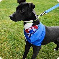 Adopt A Pet :: Beau - Brooklyn Center, MN