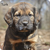Adopt A Pet :: Turk~adopted! - Glastonbury, CT