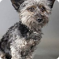 Adopt A Pet :: Tiny - Muskegon, MI