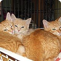 Adopt A Pet :: Arlo & Ned - CARVER, MA
