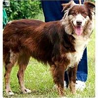 Adopt A Pet :: Zell - Orlando, FL