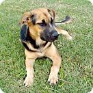 Adopt A Pet :: Peewee