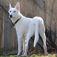 Adopt A Pet :: Jagger - Cambridge, ON
