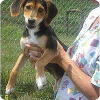 Adopt A Pet :: Sweetie - Lincolndale, NY