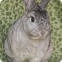 Adopt A Pet :: Duke - Santa Barbara, CA
