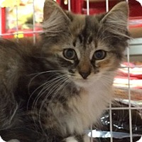 Adopt A Pet :: Colbie - East Meadow, NY