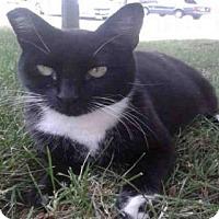 Adopt A Pet :: *LOVEBUG - Sacramento, CA