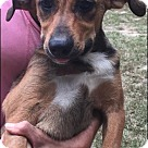 Adopt A Pet :: June