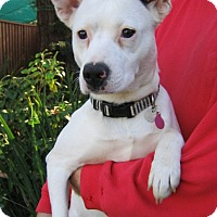 Adopt A Pet :: Kaylee - Tracy, CA