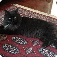Adopt A Pet :: Whitby - Toronto, ON