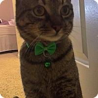 Adopt A Pet :: Vinny - Cerritos, CA