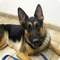 Adopt A Pet :: Xaria - Dripping Springs, TX