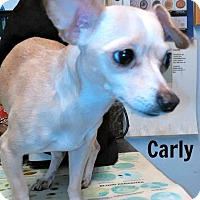 Adopt A Pet :: Carly - Kimberton, PA