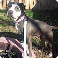 Adopt A Pet :: Hayden - Dayton, OH