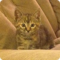 Adopt A Pet :: Mariah Moroney - Fresno, CA