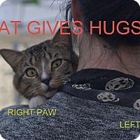 Adopt A Pet :: Loops - Brooklyn, NY
