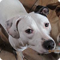 Adopt A Pet :: Leia - Cleveland, OH