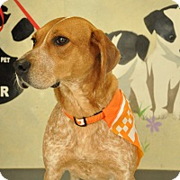 Adopt A Pet :: Adelle-URGENT - Providence, RI
