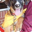 Adopt A Pet :: Baby Simon