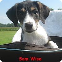 Adopt A Pet :: Sam Wise - Glastonbury, CT